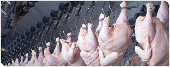 Poultry Processing | Water Treatment Process